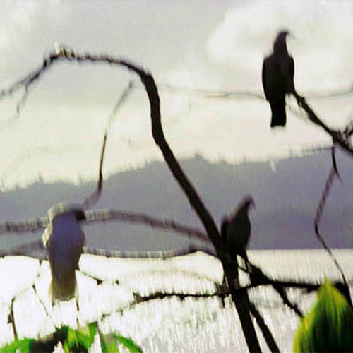 Memory Master Birds Sulawesi Indonesia Jacquie Maria Wessels